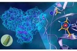 Mapping Hydrogen Atoms in SARS-CoV-2 Main Protease