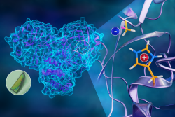 The first neutron structure of the SARS-CoV-2 main protease enzyme revealed unexpected electrical ch