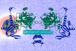 A molecular model of the protein, PKA II-beta, based on neutron scattering with solvent contrast is laid over the neutron scattering data from the Bio-SANS instrument at DOE's HFIR research facility.