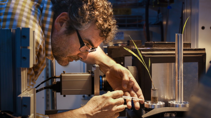 Jeff Warren, at a HFIR beamline, injects water into corn plant roots. Credit: ORNL/Genevieve Martin