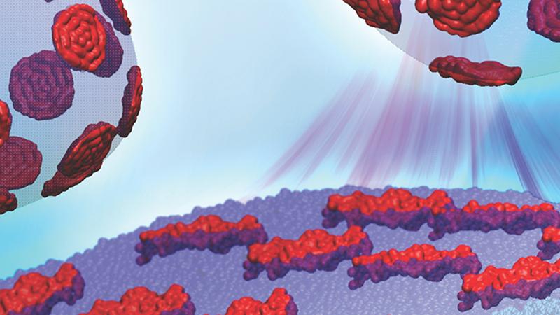 "The dynamics of ""contrast enhanced"" unilamellar lipid vesicles reveal the local mechanical properties of nanoscopic domains."