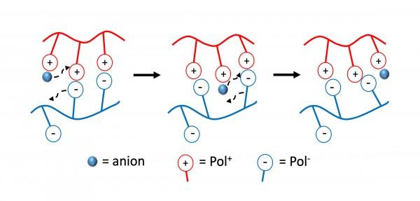 Understanding Viscosity of Entangled Polyelectrolyte Coacervates