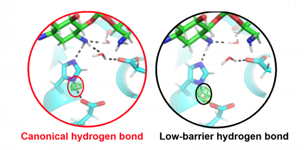 Active site of an antibiotic inactivating enzyme determined with neutron crystallography.  In the catalytic triad, the position of the hydrogen atom (circled) controls enzyme specificity and activity.  When a low-barrier hydrogen bond is present (right),