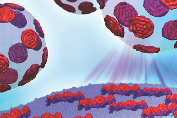 The Cheng research team is working to understand how different nanoscopic domains in lipids' bilayers regulate the mechanical properties of proteins passing in and out of the cell. Image credit: Barmak Mostofian, John Nickels and Renee Manning