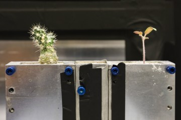 A prepared soil system featuring a cactus and a tomato plant ready for study with the IMAGING beamline at ORNL's High Flux Isotope Reactor. (Image credit: ORNL/ Genevieve Martin)