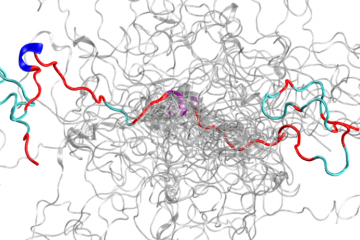 This is the configurational ensemble (a collection of 3D structures) of an intrinsically disordered protein, the N-terminal of c-Src kinase, which is a major signaling protein in humans. Image credit: ORNL