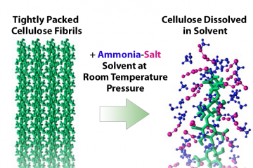 Next-generation ammonia-salt based pretreatment processes facilitate efficient breakdown of waste biomass such as corn stalks, leaves and other residue (called corn stover). (Image: Shih-Hsien Liu/ORNL and Shishir Chundawat/Rutgers University–New Brunswick)