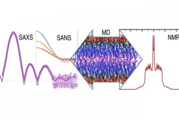 Molecular Structure of Sphingomyelin (SM) Bilayers
